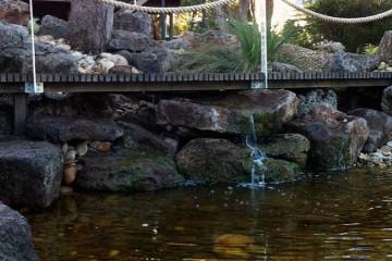 Ponds, Water Features & Billabongs